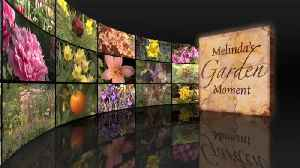 Melinda's Garden Moment – Plant Hardiness Zones [Video]