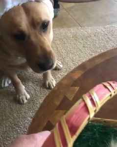 Dog Growls When Owner Tries to Take his Easter Eggs [Video]