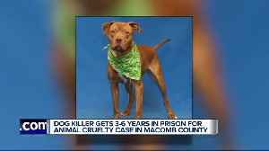 Man accused of killing Sterling the dog in Utica sentenced to at least 3 years in prison [Video]