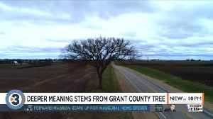 'It's a spiritual connection': Mount Hope Tree much more than bark and branches [Video]