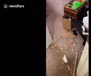 Remorseless dog chews through door to the surprise of Tennessee homeowner [Video]