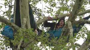 Defiant Extinction Rebellion protesters remain in trees above Parliament Square [Video]