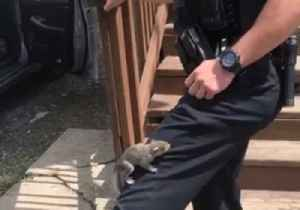 'Nutty' Suspect Clings to Syracuse Police Officer's Leg [Video]