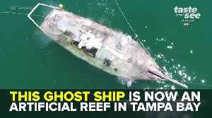 Abandoned ship transforms into artificial reef for marine life | Taste and See Tampa Bay [Video]