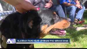 Guardian Paws places service dogs with Veterans who live with PTSD [Video]