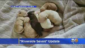 Woman Who Dumped Puppies Owns Dozens More [Video]