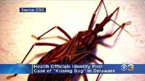 'Kissing Bug' Documented In Delaware, CDC Says [Video]