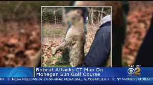 CT Man Describes Bobcat Attack [Video]