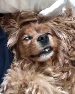 Sleeping Dog Caught In The Middle Of Intense Dream [Video]
