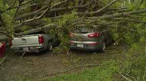 Couple Trapped After Tree Falls on Car Rescued by Neighbors [Video]