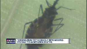 Bloodsucking 'kissing bug' that usually bites people on the face found in Delaware for first time [Video]