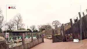 Headcam footage from ZSL shows penguins up close! [Video]
