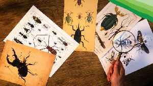 In Search of Undiscovered Insects [Video]