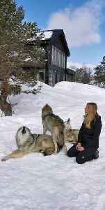 Woman incredibly starts pack howl with Norwegian wolves [Video]