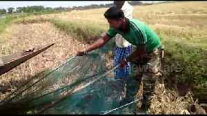 Snake rescuers free deadly cobra trapped in fishing net [Video]