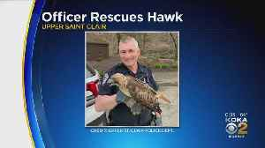Hawk Struck By Vehicle In South Hills, Officer Helps Rescue It [Video]