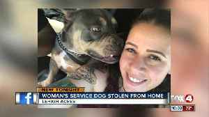 Service dog stolen from woman's home [Video]