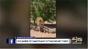 News video: Founder of Sanctuary attacked by tiger
