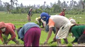 Livelihood at risk: Farmers question Philippines rice tax [Video]