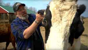 NJ Truck Driver Rescues Animals [Video]
