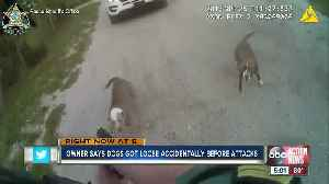 Teen, elderly man attacked by pack of dogs [Video]