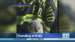 Firefighters Rescue Kitten Stuck In Engine Compartment [Video]