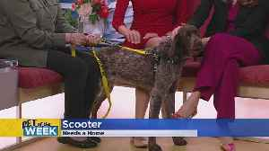 Meet Scooter, Our Pet Guest Of The Week [Video]