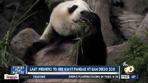 Last chance to see San Diego Zoo pandas [Video]