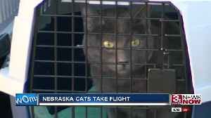 Humane Society Cats Being Sent to Pacific Northwest [Video]