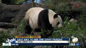 Final day to see San Diego Zoo's giant pandas [Video]