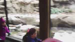 Little Girls Play With Cat Friend Through Glass Barrier at Zoo [Video]