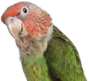 Parrot goes silence in custody after drug raise [Video]