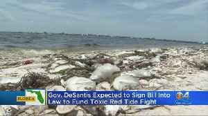 Law Would Fund Toxic Red Tide Fight [Video]