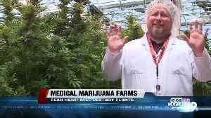 Medical marijuana farms could be in danger with possible nearby hemp production [Video]
