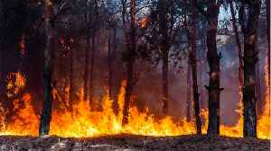Winnie-the-Pooh's Real-Life Hundred Acre Wood Caught Fire [Video]