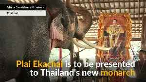 Revered 'white' elephant to be royal present to Thai king [Video]