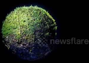 Artist creates eerie miniature world out of moss only 5cm in diameter [Video]