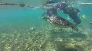 Swimmer rescues turtle trapped by rope at beach in the Philippines [Video]