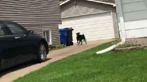 Mail Service Suspended in Illinois Neighborhood to Protect Carrier from Loose Dog [Video]