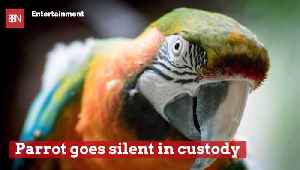 This Parrot Isn't A Snitch [Video]