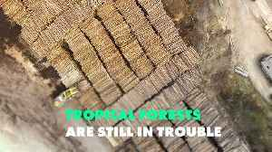 2018 was a terrible year for tropical forests [Video]