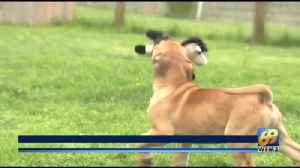 This week's Furry Friends come from Logan's Heroes Animal Rescue Inc. [Video]