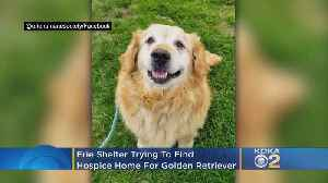 Erie Shelter Trying To Find Hospice Home For Golden Retriever [Video]