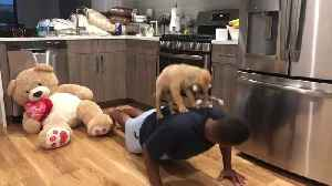 Puppy Helps with Workout Routine [Video]