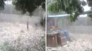 Extreme Storm Pelts South Africa With Giant Chunks Of Hail Tearing Branches Off Trees [Video]