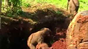 Baby elephants rescued from pit in Sri Lanka [Video]