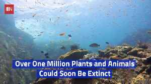The Earth Is Facing A Massive Extinction Event [Video]