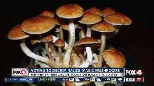 Denver voters will decide whether to decriminalize 'magic mushrooms' [Video]