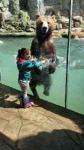Bear at Zoo Entertains Little Girl by Jumping in Water [Video]