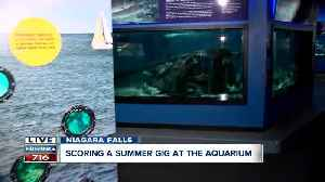 Have 1500 different animals as your co-workers at Aquarium of Niagara [Video]